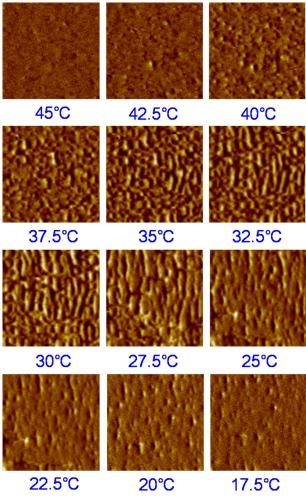 200909-q3-images-crosstalk-eliminated-xe-afm-temperature-ependent-magnetic-afm