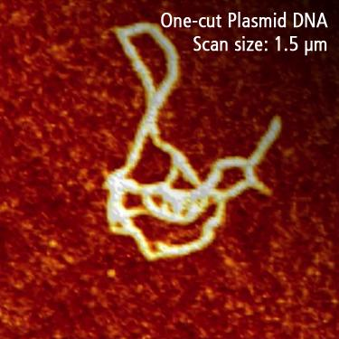 200808-park-systems-strong-presence-icn-t-2008-one-cut-plasmid-dna-afm-image